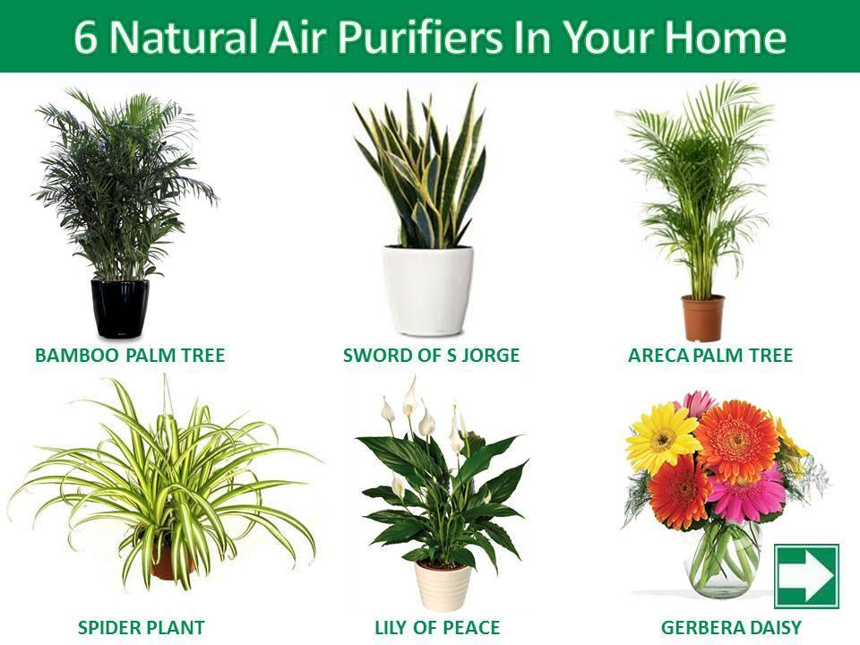 6 Natural Air Purifiers In Your Home