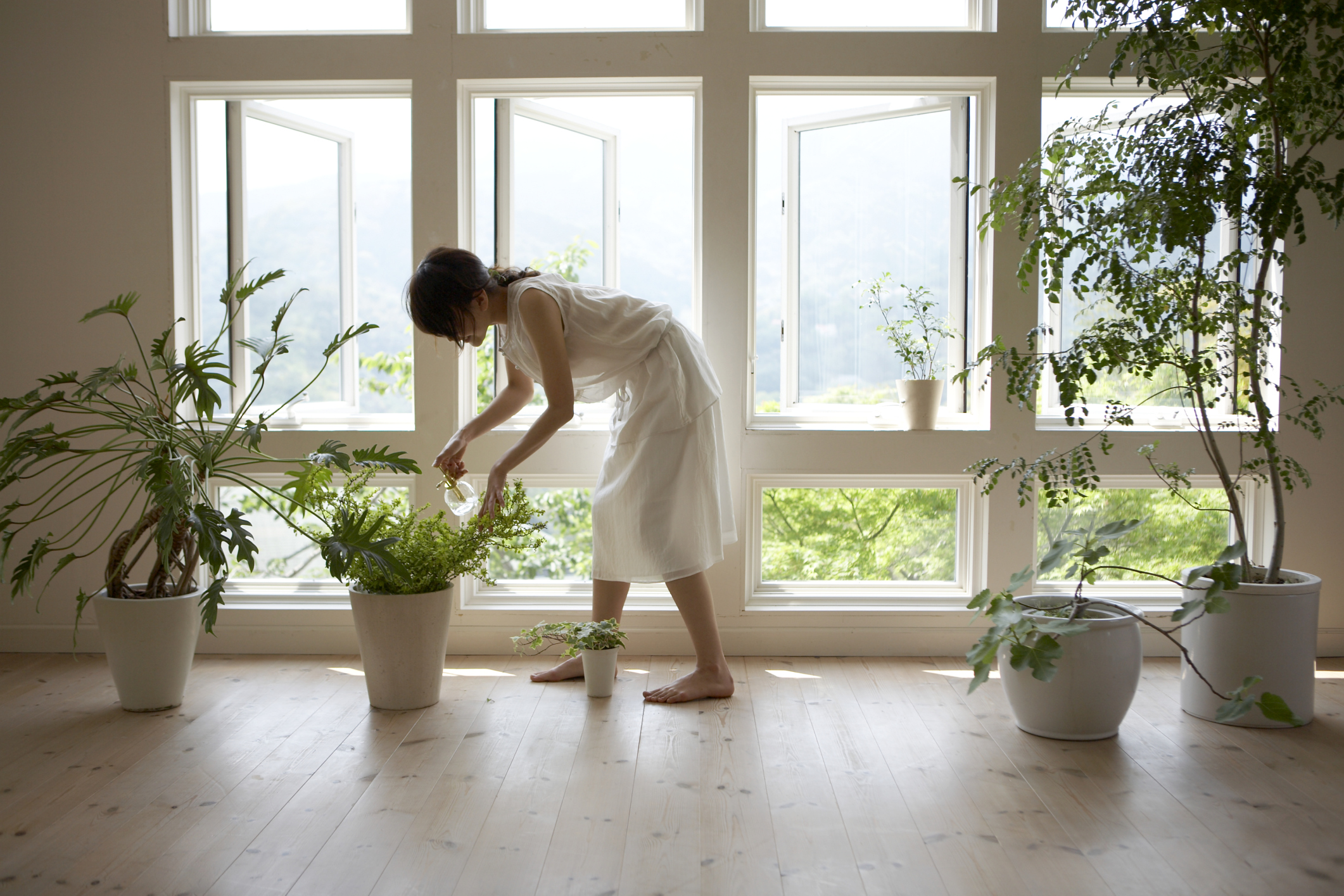 Best Indoor Plants For Clean Air 6 Natural Air Purifiers In Your Home